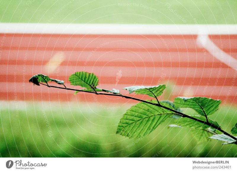 der blättrige Ast vor Sportbahn rot Rennbahn Sportstätten Laufsport Laufbahn Wettlauf Blatt Farbfoto Textfreiraum oben