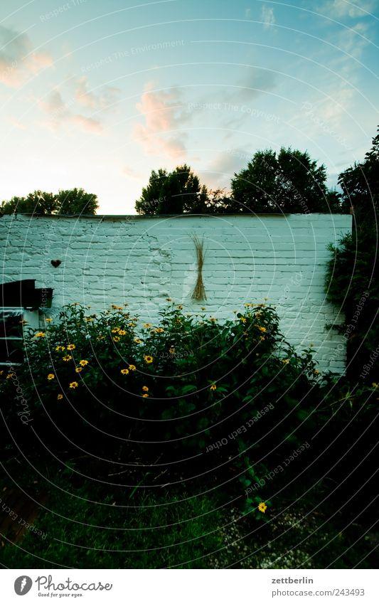 Als steffne endlich weg war... Erholung Garten Natur Pflanze Himmel Wolken Sonnenaufgang Sonnenuntergang Blume Sträucher Blatt Blüte Wachstum Schrebergarten