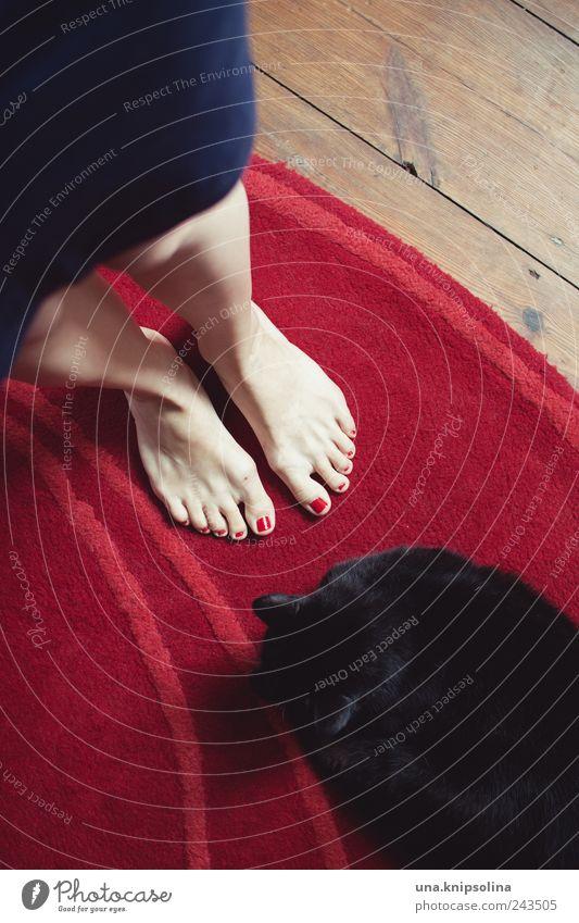 good.bye Nagellack Häusliches Leben Wohnung Teppich Dielenboden Holz feminin Frau Erwachsene Beine Fuß 1 Mensch Rock Tier Haustier Katze beobachten liegen
