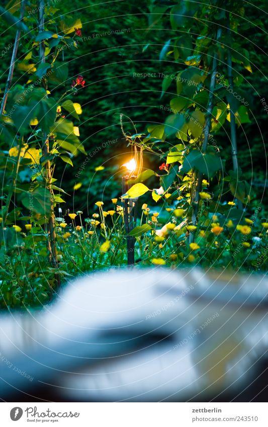 Garten mit Fackel und Gitarre Baum Pflanze Sommer dunkel Erholung Gefühle Stimmung Wohnung Umwelt Wachstum Kerze Romantik Freizeit & Hobby Häusliches Leben