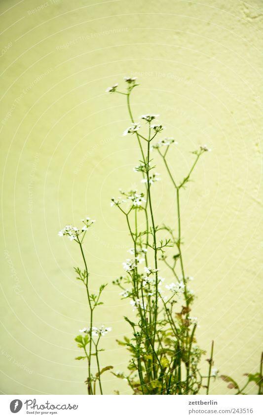 Irgendeine Pflanze Garten Umwelt Natur Klima Klimawandel Gras Blatt Blüte Grünpflanze Wildpflanze Park Wiese Feld Wachstum Ernte Schrebergarten wachstrum