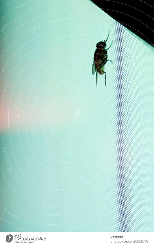 Künstliche Bräune grün Einsamkeit Tier Farbe sitzen warten fliegen Fliege hoch gefährlich Wildtier Insekt Bildschirm aufsteigen krabbeln Flugangst