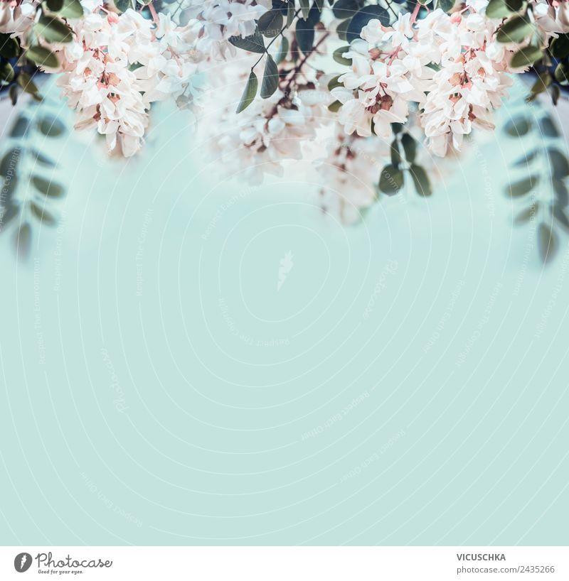 Natur Hintergrund mit Akazienblüten Design Gesundheit Behandlung Alternativmedizin Sommer Garten Pflanze Frühling Blatt Blüte Gesundheitswesen Stil