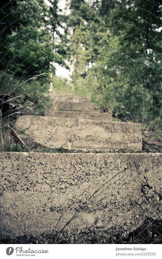 Treppenstufe im Wald Natur grün oben Umwelt Gras Wege & Pfade Park braun Beton wandern unten hart aufsteigen Täuschung