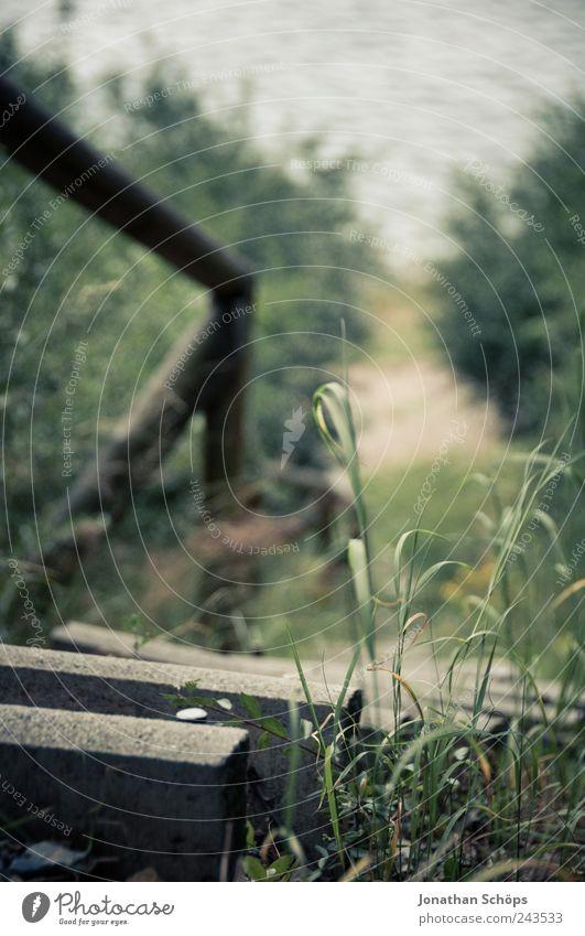 Treppe zum See Umwelt Natur Landschaft Wasser Pflanze Gras Garten Park Wald Seeufer Flussufer Insel Teich braun grün wandern Erholung Ferien & Urlaub & Reisen