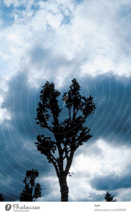 Baum im Gewitter Wolken Hochformat Wetterstimmung dunkel bedrohlich hoher Kontrast