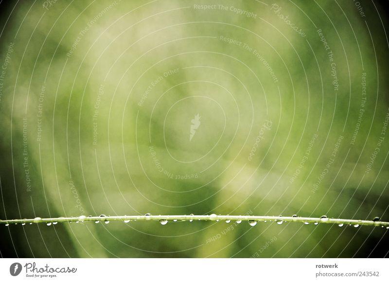 Gerade im Grünen Natur grün Pflanze Einsamkeit Wiese Gras Frühling Garten Zufriedenheit Trauer ästhetisch authentisch Vergänglichkeit Gelassenheit Überraschung