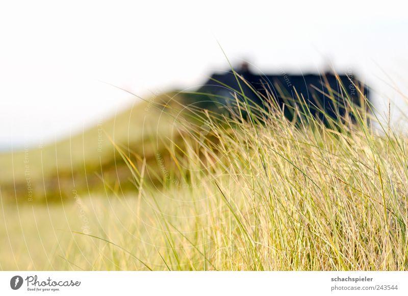 Haus in den Dünen Ferien & Urlaub & Reisen Tourismus Sommer Natur Landschaft Pflanze Gras Design Naturschutz Küstenschutz Dach hell braun gelb grün weiß Idylle