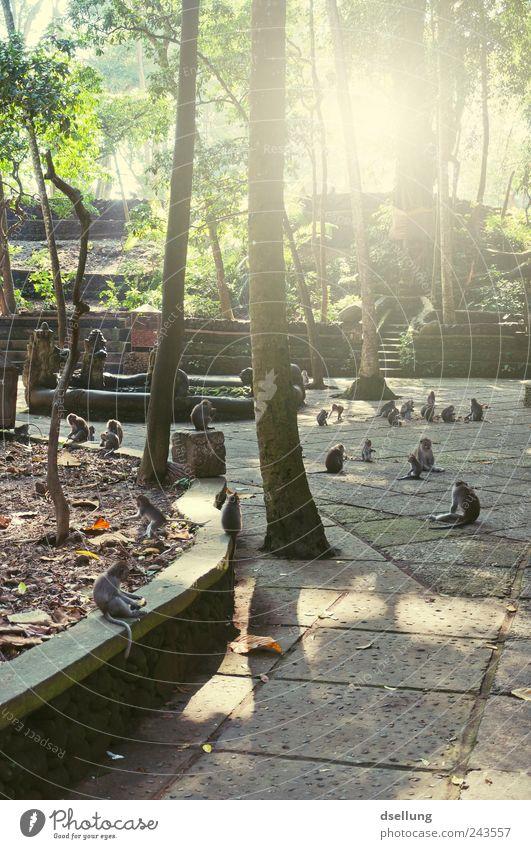 Bali VII Natur Baum Pflanze Ferien & Urlaub & Reisen Tier Park Tiergruppe wild Zoo Wildtier Urwald exotisch Affen Indonesien Tierfamilie