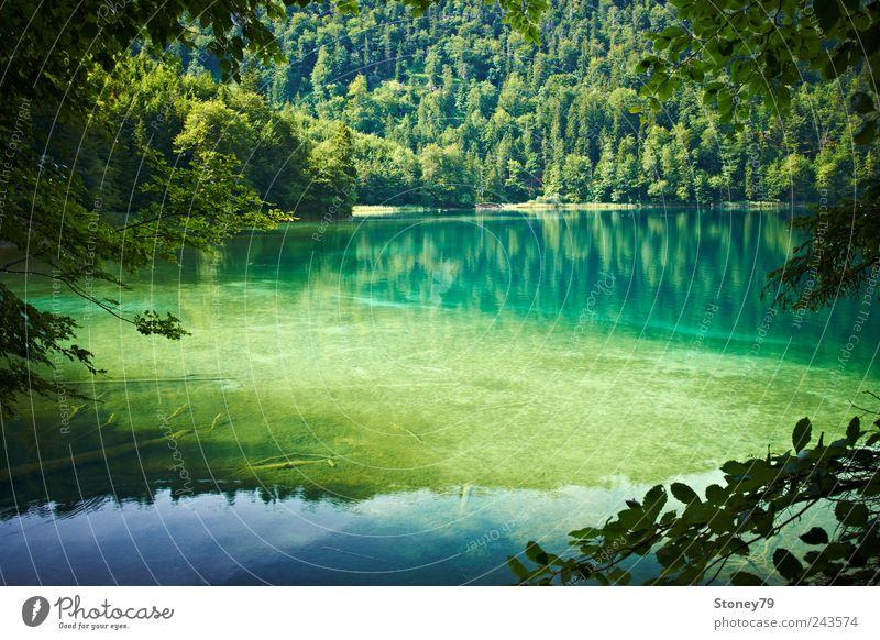 Gebirgssee Natur Landschaft Wasser Sommer Schönes Wetter Baum Wald Seeufer Sauberkeit grün ruhig Reinheit Einsamkeit Erholung klar Totholz Alpsee Farbfoto