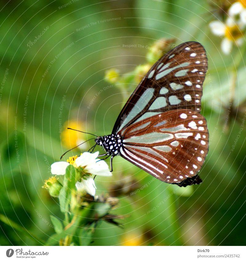 Schmetterling in Taipeh Umwelt Natur Pflanze Tier Blume Blüte Wildpflanze Garten Park Wiese Taiwan Wildtier Insekt 1 Blühend Fressen sitzen ästhetisch frisch
