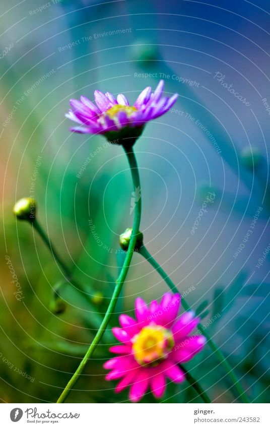 Living Colour Natur Blume Pflanze Blatt Farbe Blüte Umwelt Wachstum mehrere Kitsch fantastisch Stengel Duft Blütenknospen Blütenblatt Farbenspiel