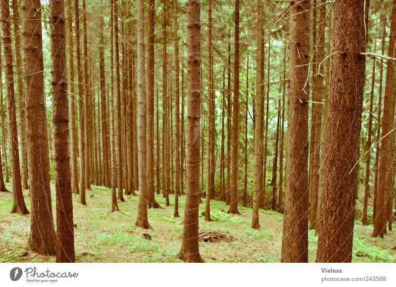 wie man in den wald hineinruft...... Natur Baum Pflanze Wald Landschaft braun beobachten natürlich Nadelbaum Erzgebirge