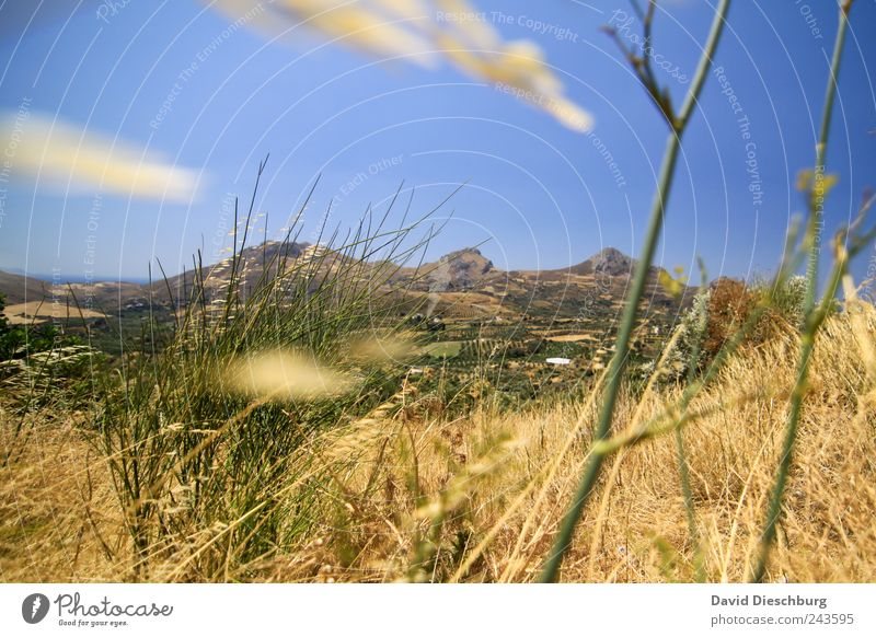 In den Bergen Natur blau Ferien & Urlaub & Reisen Pflanze Sommer Ferne Landschaft gelb Berge u. Gebirge Gras braun Schönes Wetter trocken Stengel Sommerurlaub Wolkenloser Himmel