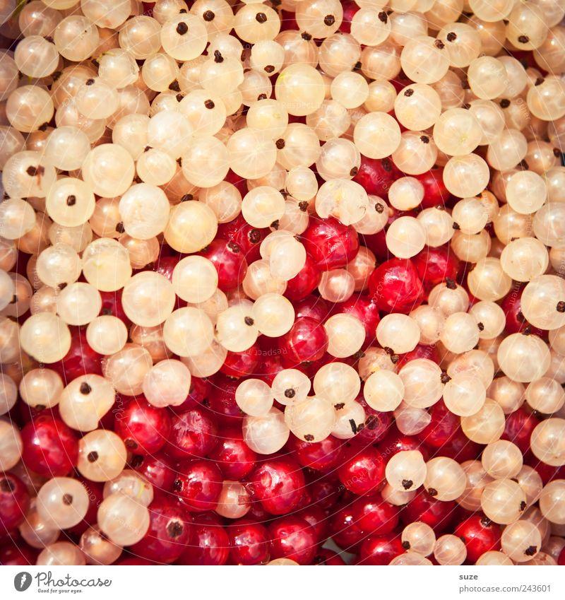 *1.400* Johanniter weiß rot Frucht natürlich Lebensmittel Ordnung frisch Ernährung Gesunde Ernährung süß viele rund lecker Bioprodukte Beeren Vitamin