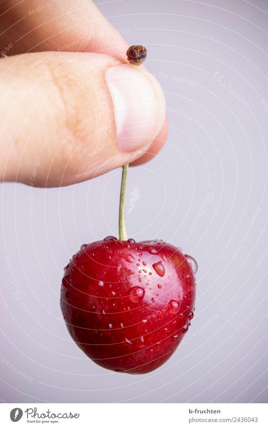 eine Kirsche halten Lebensmittel Frucht Bioprodukte Hand Finger Essen festhalten frisch Gesundheit süß rot genießen Wassertropfen reif Ernte fruchtig Farbfoto