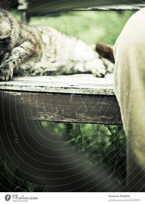 mit Dir ist einfach alles gut. Katze Zusammensein sitzen liegen Vertrauen Gelassenheit genießen Geborgenheit Hauskatze Anschnitt Bildausschnitt Tier Toleranz Akzeptanz Gartenbank Hosenbeine
