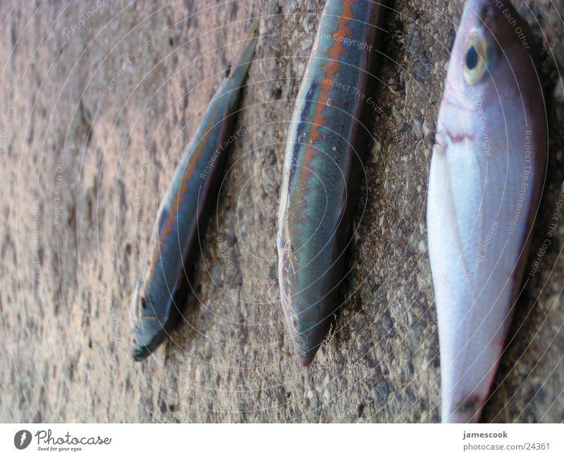 Fisch Meer Ernährung obskur Angeln