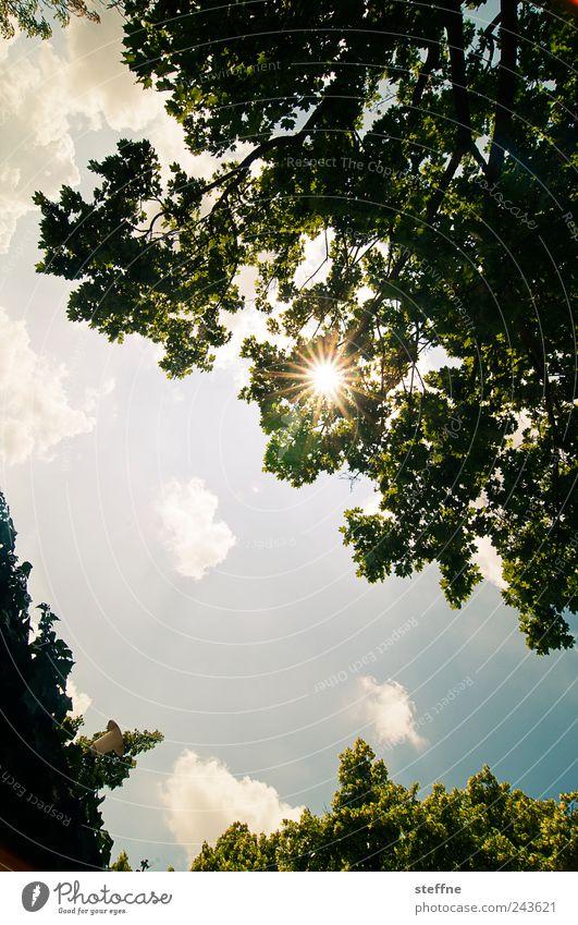 Regensburger Sonne Himmel Wolken Sonnenlicht Sommer Schönes Wetter Baum Blatt Farbfoto mehrfarbig Sonnenstrahlen Gegenlicht Froschperspektive
