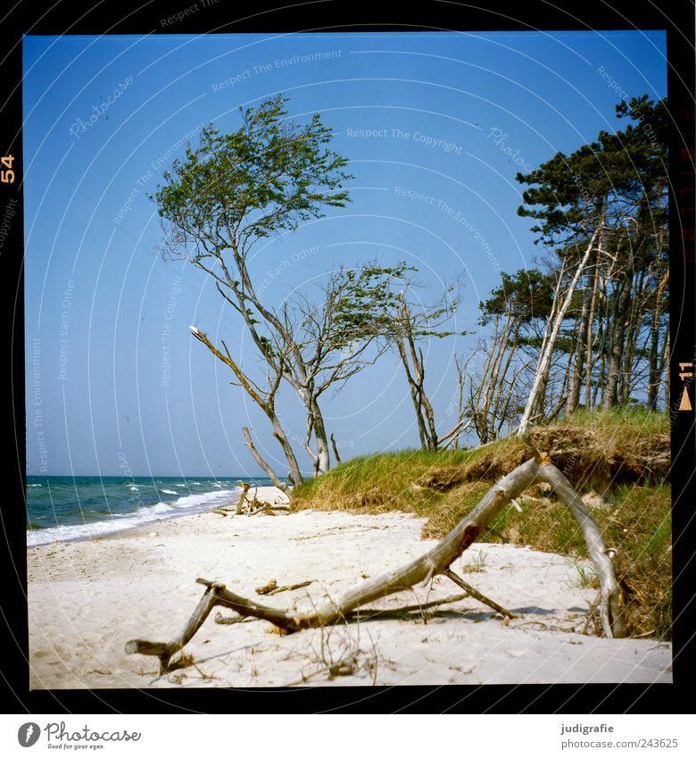 Weststrand Umwelt Natur Landschaft Pflanze Wasser Himmel Wolkenloser Himmel Sommer Klima Schönes Wetter Baum Gras Küste Strand Ostsee Meer Darß natürlich wild