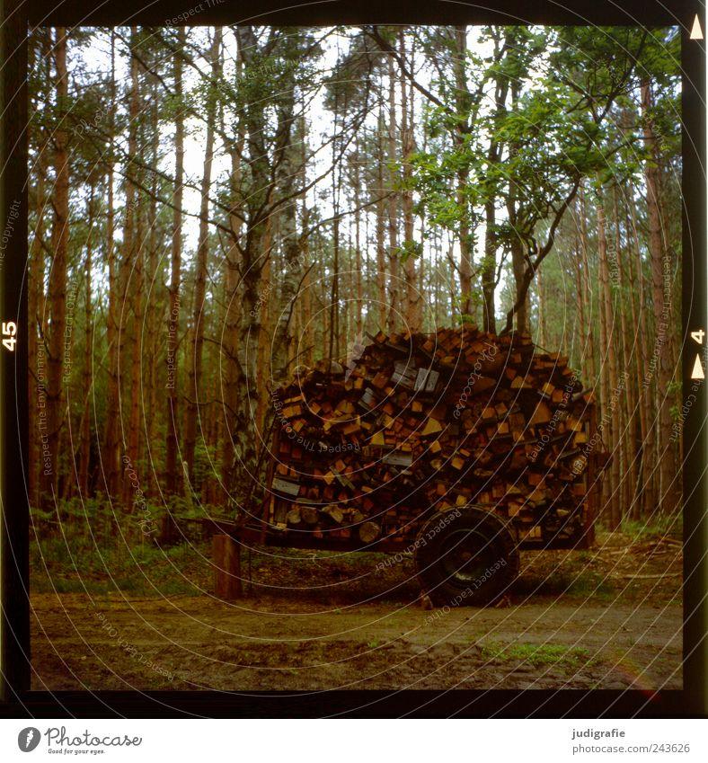 Holz Natur Baum Wald Landschaft Umwelt außergewöhnlich Anhäufung Anhänger Brennholz