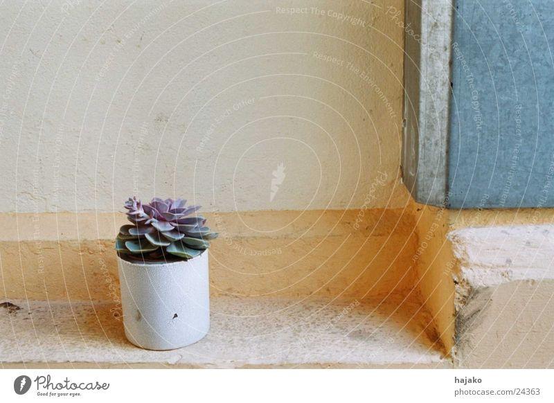 Mauerblume Blume Topf Haus Dinge Treppe