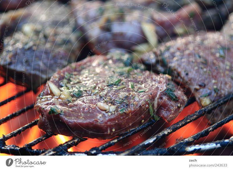 Sommer - Endspurt braun Ernährung Lebensmittel Feuer genießen Kräuter & Gewürze Appetit & Hunger Grillen lecker Abendessen Fleisch Braten Grillrost Pflanze