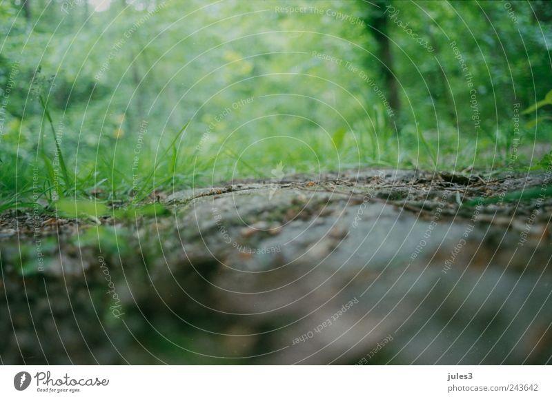 Wald – verborgen grün Pflanze Sommer gelb Gras Wege & Pfade wandern Erde ästhetisch Idylle unten Grünpflanze Nutzpflanze