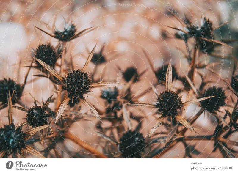 Natur Sommer Pflanze schön Baum Blume Blatt Winter Wald Umwelt Herbst Frühling Blüte Wiese Gras Garten