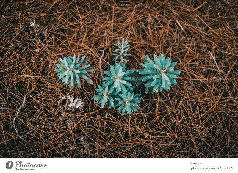 Natur Ferien & Urlaub & Reisen blau Pflanze Farbe schön grün Blatt Wald Berge u. Gebirge Umwelt Wiese natürlich Garten braun wild