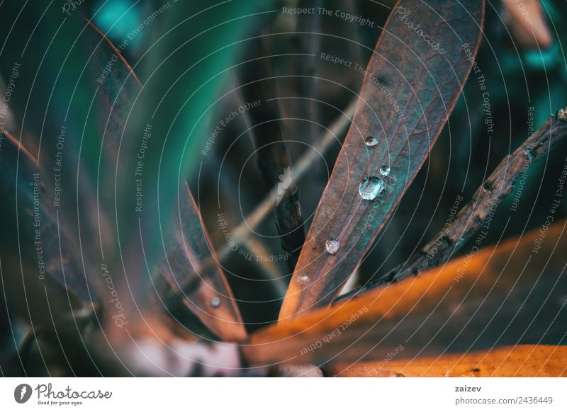 Natur Sommer blau Pflanze Farbe schön grün Wasser Blatt Wald dunkel Umwelt Herbst Frühling Wiese natürlich
