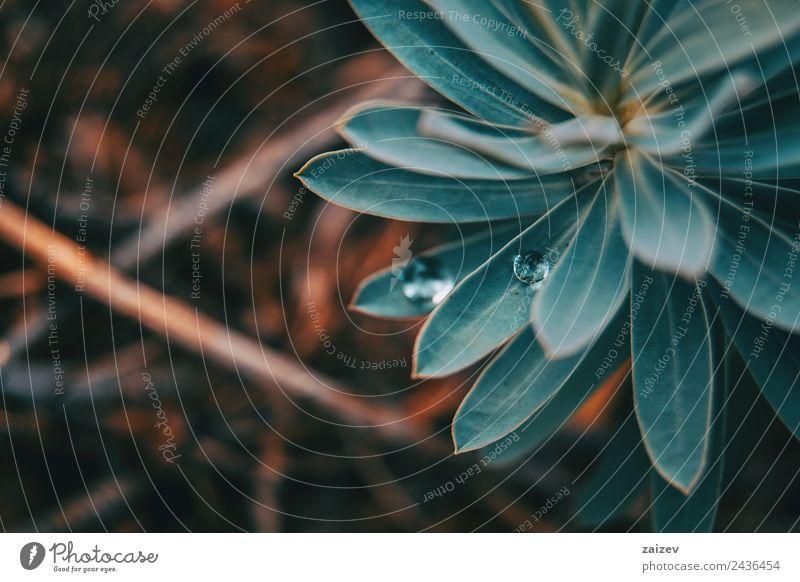 Natur blau Pflanze Farbe schön grün Wasser Blatt Wald Umwelt Wiese natürlich Garten Felsen wild Park