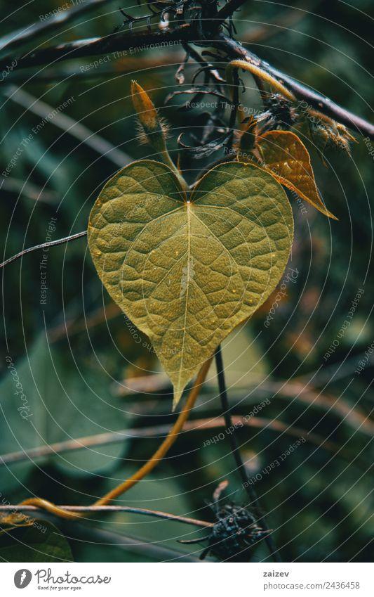Natur Pflanze Farbe schön grün Blatt Wald gelb Umwelt Liebe Wiese natürlich Garten Design wild Park