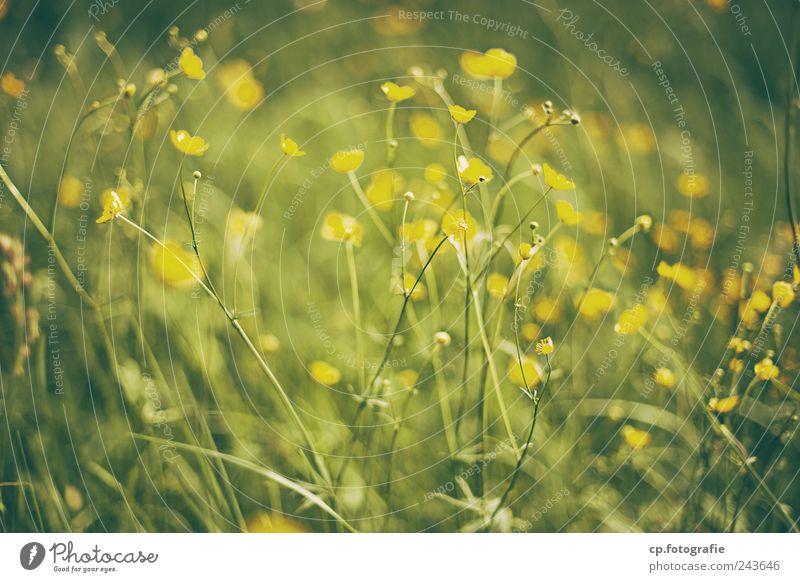 Blumenwiese Pflanze Sommer Wiese Garten Blüte Park Schönes Wetter