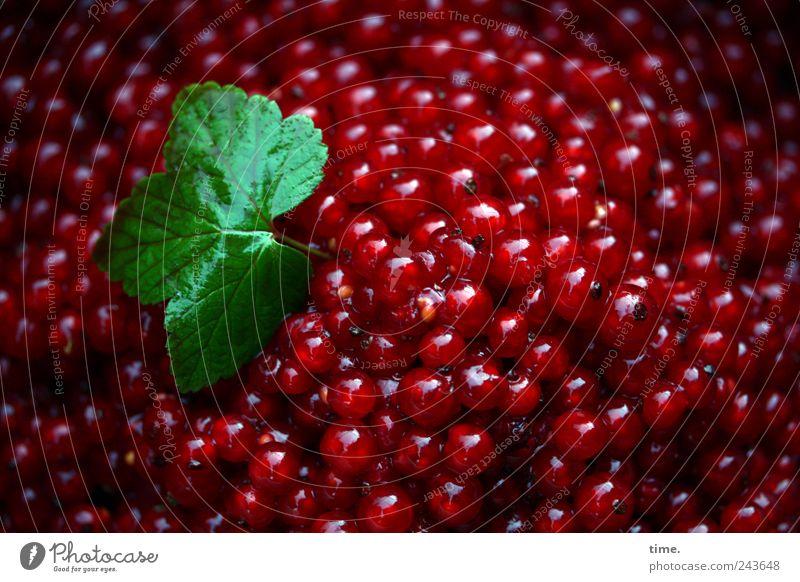 Heimvorteil Natur grün rot Blatt Ernährung Lebensmittel Frucht frisch Ordnung rund natürlich lecker viele Mischung Bioprodukte Beeren