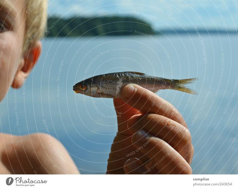 Nichtschwimmer Fisch Ernährung Fingerfood Sushi Ferien & Urlaub & Reisen Sommer Sommerurlaub Strand Meer Kind Haut Kopf Hand 3-8 Jahre Kindheit Natur Wasser See