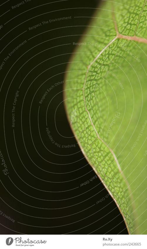 Am Rand... Natur Baum grün Pflanze Blatt Garten Wachstum Dekoration & Verzierung dünn Blühend einrichten Blattadern Faser Grünpflanze verwaschen Blattgrün