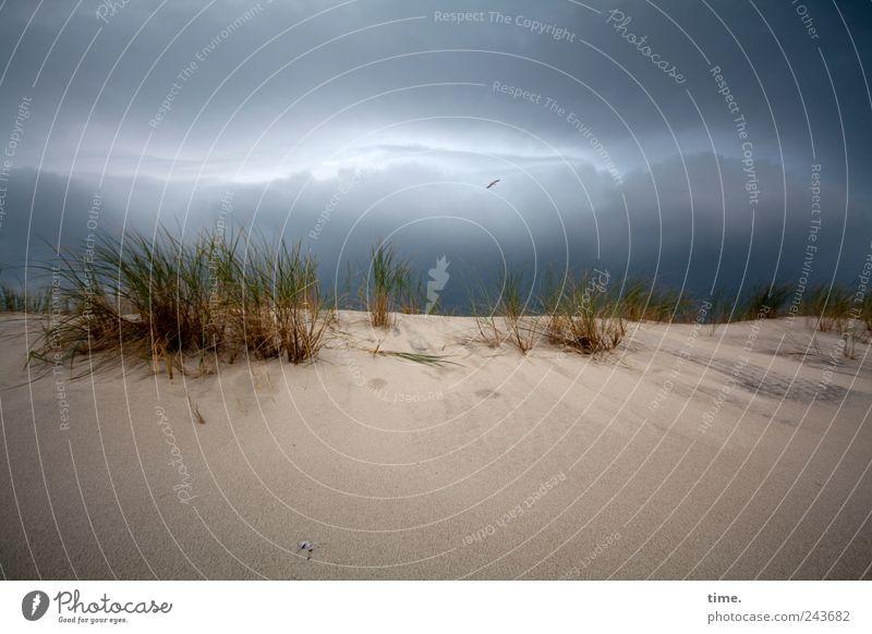 Wahrscheinlichkeitsprognose, 95% Umwelt Natur Landschaft Sand Himmel Wolken Wetter schlechtes Wetter Gras Küste bedrohlich dunkel bizarr Endzeitstimmung Energie