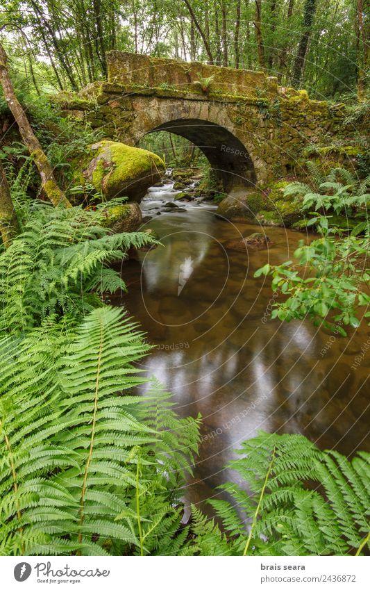 Alte Brücke Freizeit & Hobby Ferien & Urlaub & Reisen Tourismus Ausflug Abenteuer Expedition Natur Landschaft Pflanze Frühling Baum Moos Wald Fluss Wasserfall