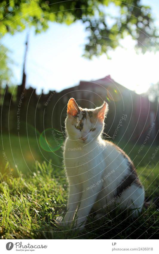 Katze Erholung Tier ruhig Religion & Glaube Traurigkeit Gefühle Stimmung Zufriedenheit träumen Beginn entdecken Sehnsucht Frieden Gelassenheit Haustier