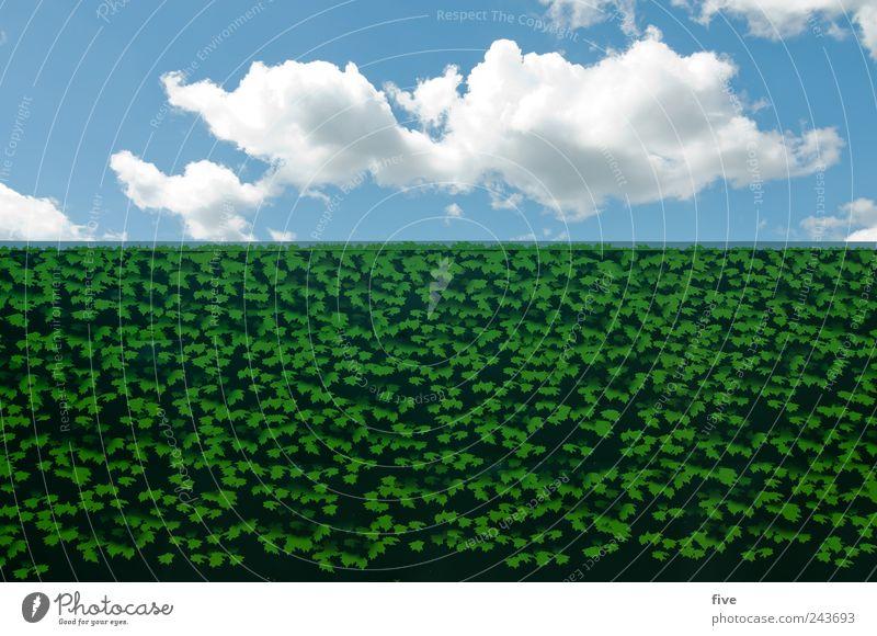 London Calling: Nature In Town Himmel blau grün Pflanze Sommer Ferien & Urlaub & Reisen Blatt Wolken Wand Mauer Park Ausflug Tourismus Schönes Wetter