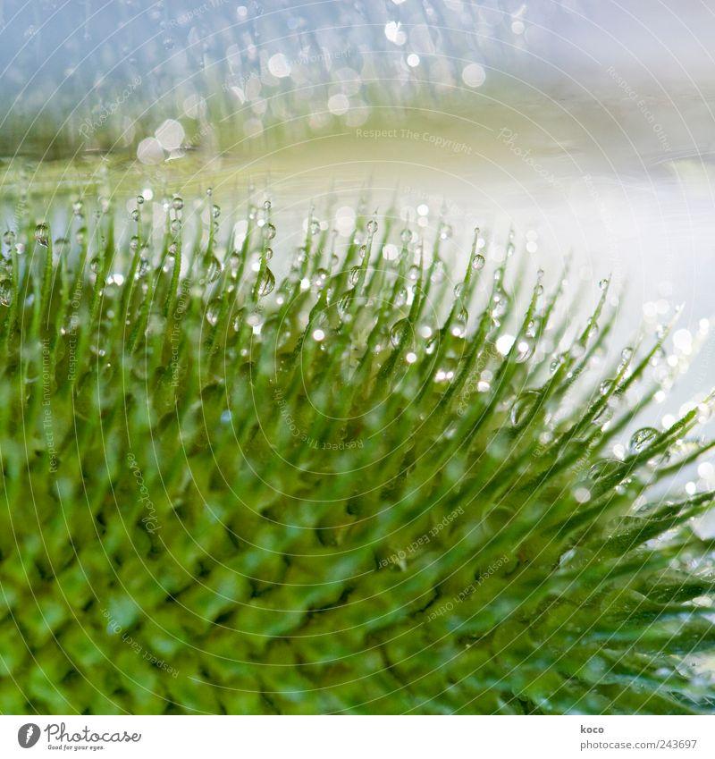 Was uns der Regen schenkt Natur blau Wasser grün weiß schön Pflanze Sommer Blatt Leben Haare & Frisuren Frühling glänzend nass Wassertropfen