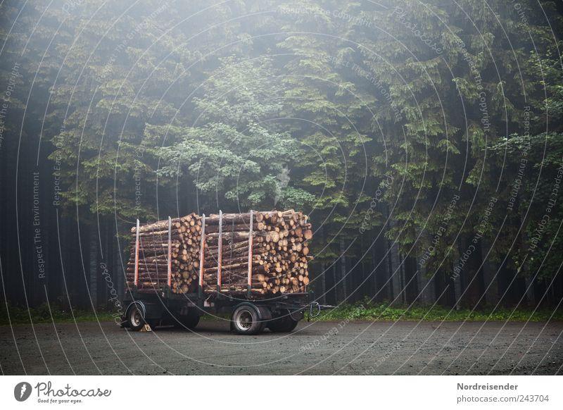 Hochglanzbroschüren Natur Baum Pflanze Wald dunkel Arbeit & Erwerbstätigkeit Holz Stimmung Nebel Güterverkehr & Logistik Landwirtschaft Ernte Baumstamm nachhaltig Forstwirtschaft Wegkreuzung