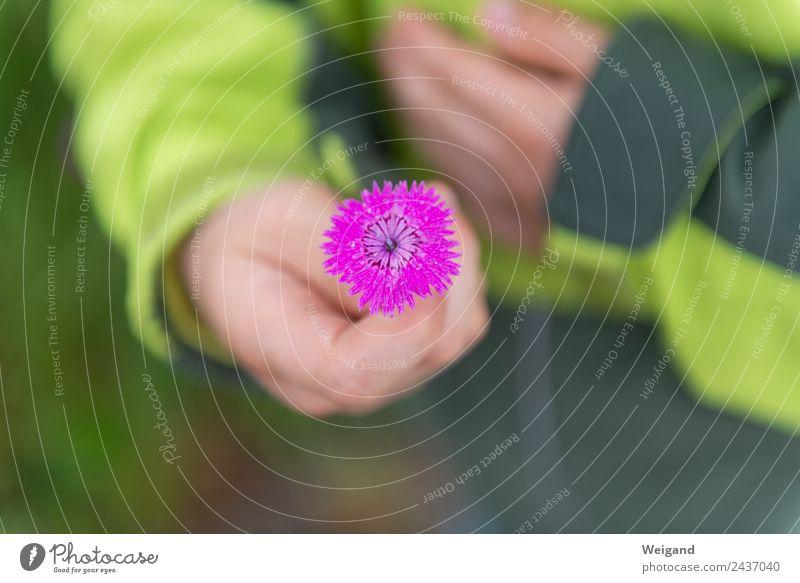 Muttertag Meditation Duft Kindergarten Schule Schulkind Kleinkind Junge Kindheit Hand 1 Mensch 3-8 Jahre Blume Blüte berühren Blühend elegant Mitgefühl trösten