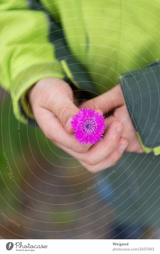 Blütenschatz 2 harmonisch Wohlgefühl Muttertag wandern Kindergarten Hand 1 Mensch Blume Blühend natürlich Mitgefühl Güte Selbstlosigkeit Menschlichkeit