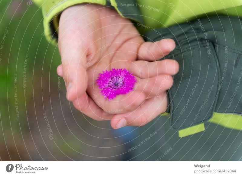 Blütenschatz Glück harmonisch Kindergarten Kleinkind Junge Kindheit Jugendliche Hand 3-8 Jahre berühren ästhetisch Freude Fröhlichkeit Zufriedenheit