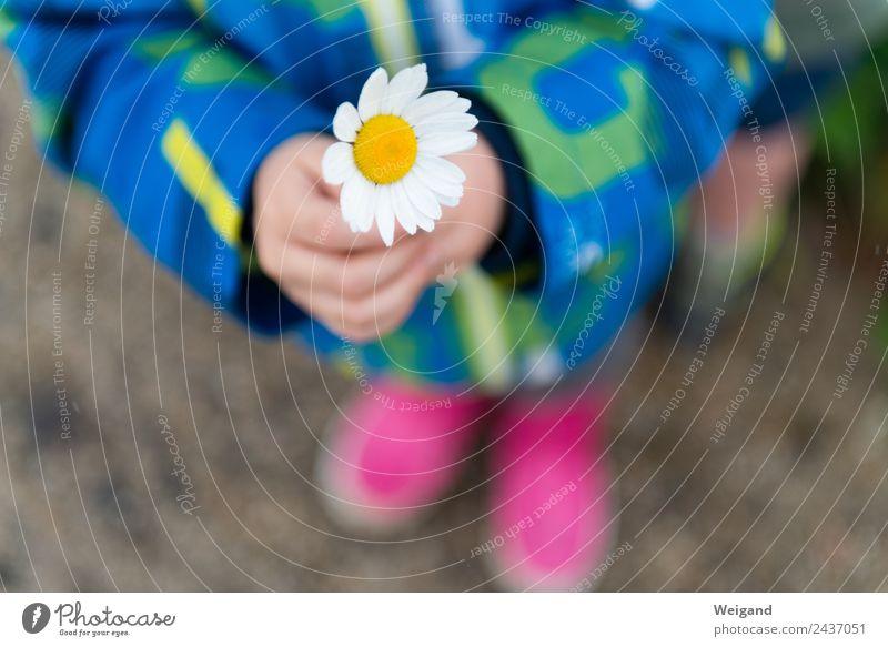 Dankeschön Kindergarten Kleinkind Kindheit Jugendliche 1 Mensch 3-8 Jahre Blume Blüte beobachten genießen Vertrauen Geborgenheit Mitgefühl Güte Menschlichkeit