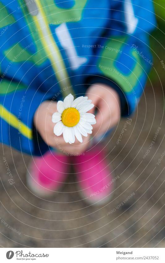 Blumengruß harmonisch Kindergarten Baby Kleinkind Mädchen Kindheit 1 Mensch 3-8 Jahre Spielplatz genießen Glück positiv Vertrauen Güte Selbstlosigkeit