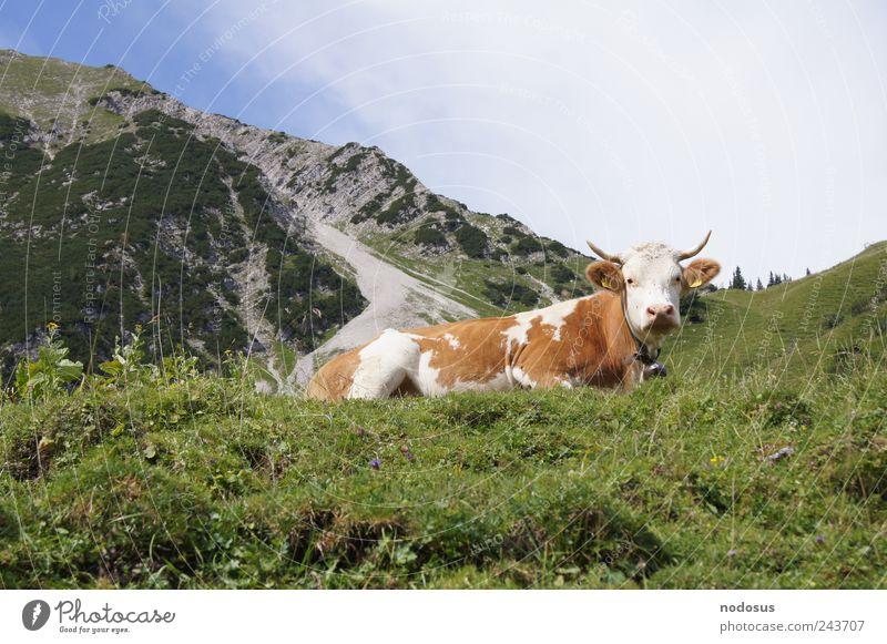 Am Kuhjoch Natur Sommer Blume Ferne Berge u. Gebirge Gras Glück Stein Zufriedenheit wandern Tourismus frisch natürlich Alpen Idylle Gipfel