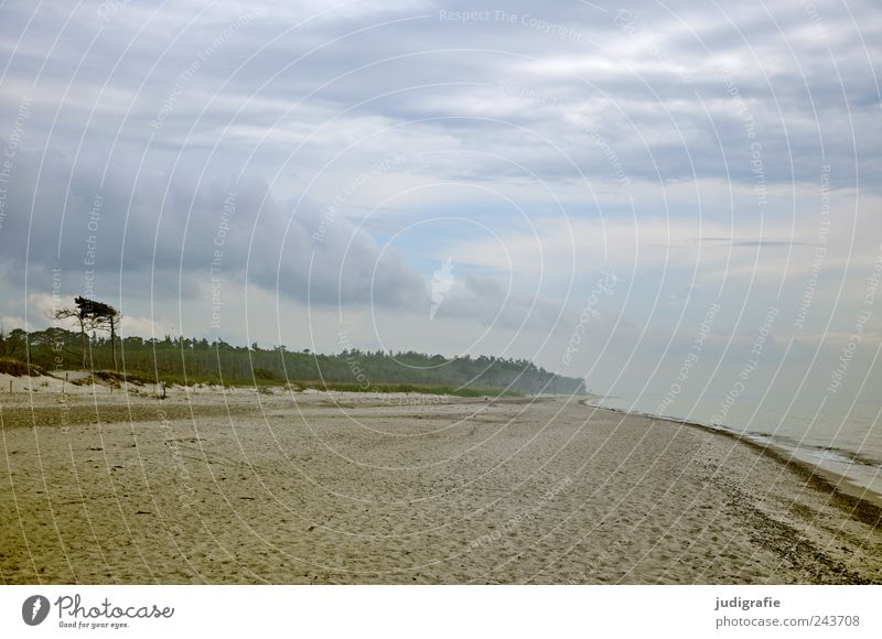 Weststrand Umwelt Natur Landschaft Pflanze Wasser Himmel Wolken Klima Küste Strand Ostsee Meer Darß Ferne kalt wild Stimmung Windflüchter Farbfoto Außenaufnahme
